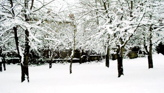 Winter-Weight-Loss-Programs